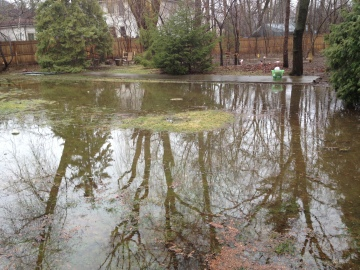 The lake in our backyard after the Flood.